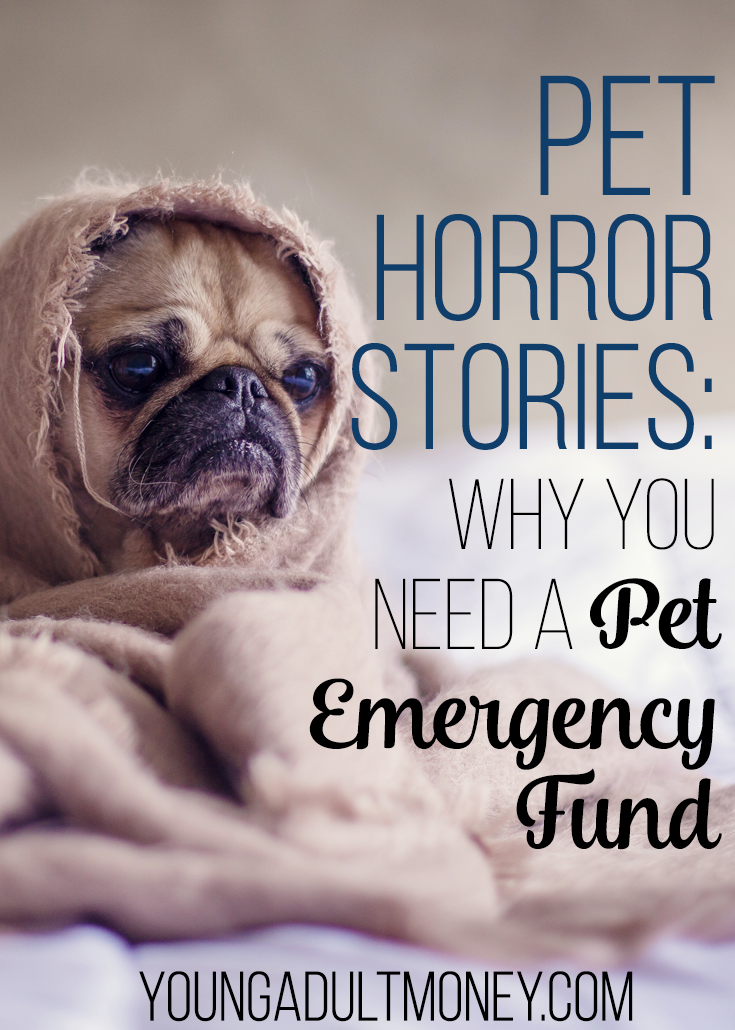 Pet Horror Stories Why You Need A Pet Emergency Fund Young Adult